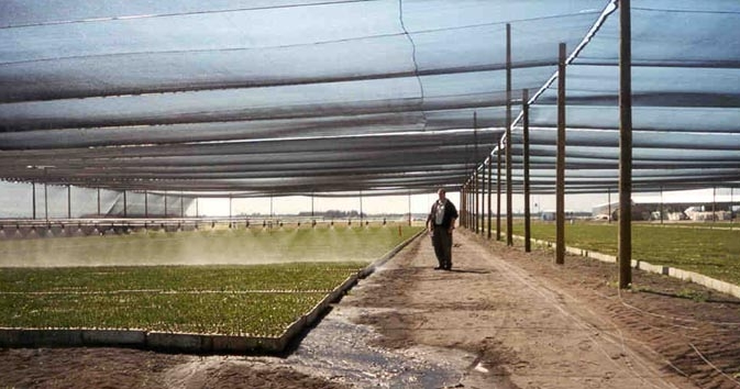 Best strains are identified and applied in the tree nursery through standard irrigation system