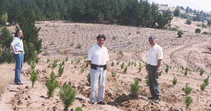 Establishing  Pine seedlings on unproductive and eroding grazing land in Central Chile